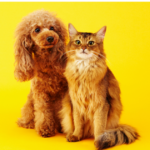 cat and dog banner